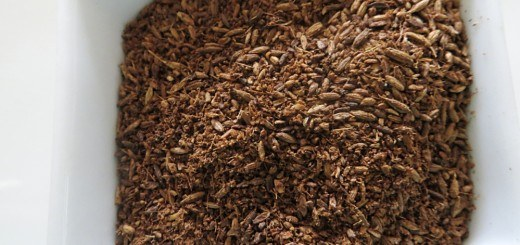Roasted Cumin seeds