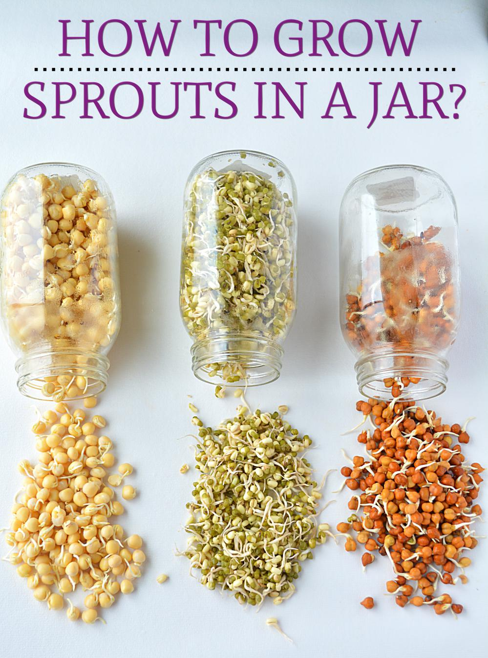 sprouts-in-a-jar-2