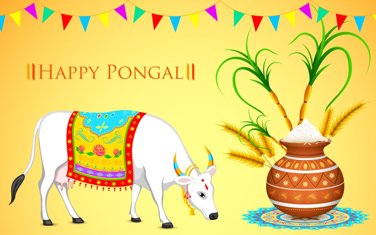 Pongal - Harvest Festival, four days of pongal, how pongal is ...